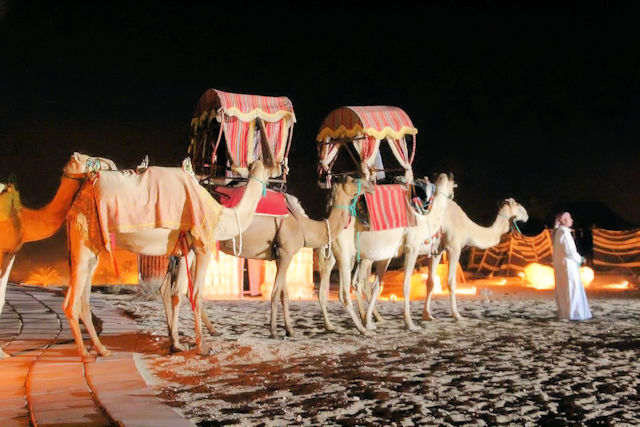 Dubai Wüste Kamelkarawane (C) JUREBU