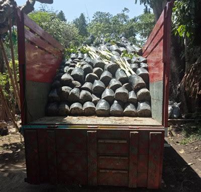 Angkutan Truk Surabaya Bima