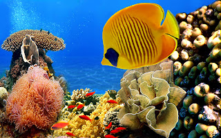Coral reef fish 11