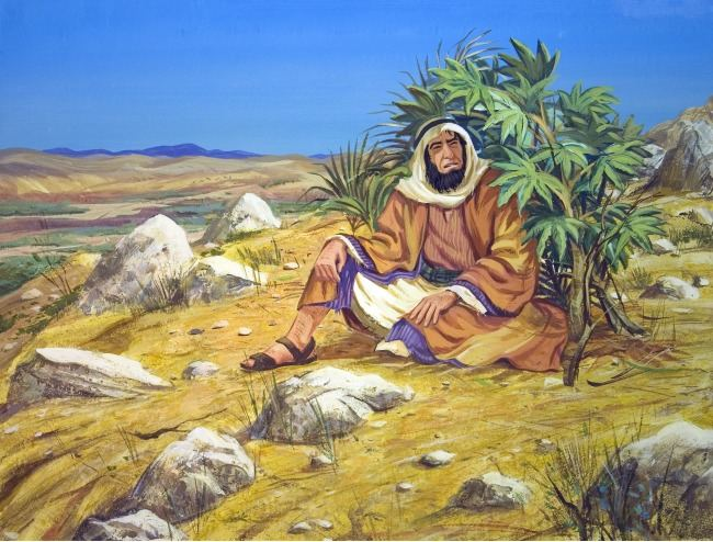 God 'provided a leafy plant and made it grow up over Jonah to give shade for his head to ease his discomfort, and Jonah was very happy about the plant'.