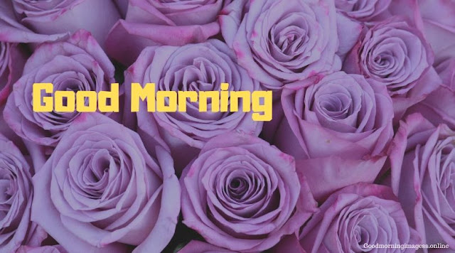Good Morning Images In Roses 5