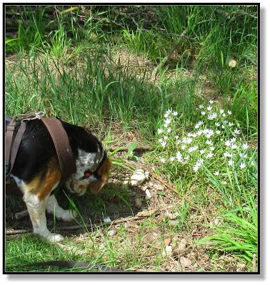 Emma findet weiße Blumen