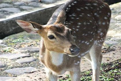 Hewan Ini Bukan Spesies Asli Indonesia Tetapi Sangat Disayang Dan Hanya Bisa Ditemukan Di Lokasi Khusus