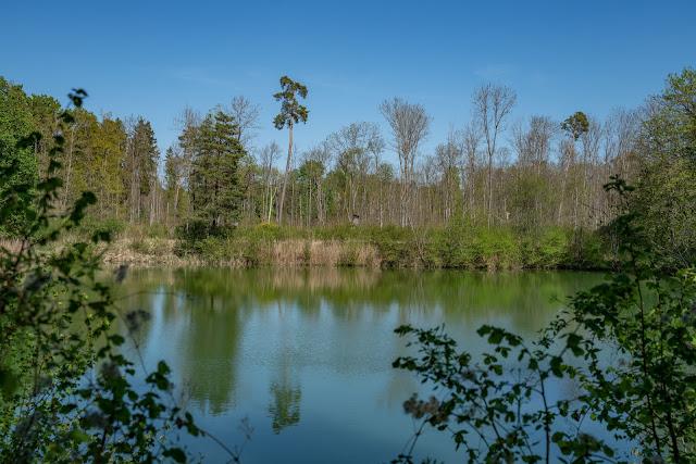 Premiumwanderweg DonAUwald | Etappe 2 von Offingen nach Gundelfingen 06