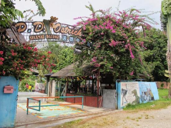 PD OSTRICH SHOW FARM - Tempat Menarik Di Port Dickson Untuk Pasangan