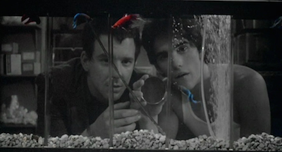 Criterion confessions for Rumble fish summary