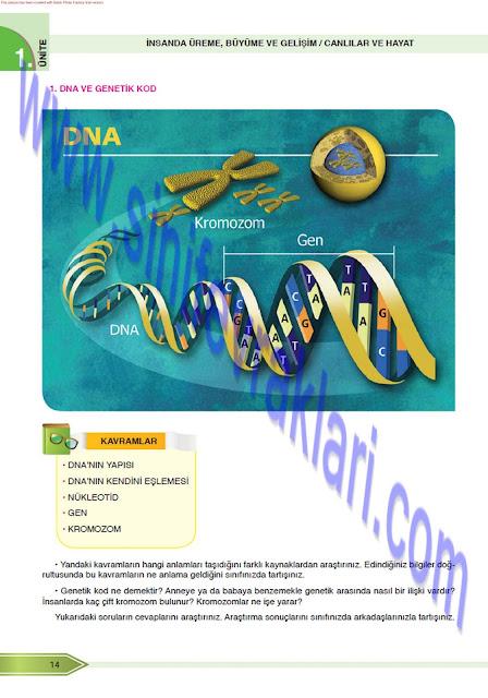 8. Sınıf Fen Bilimleri Öğün Yayınları Ders Kitabı Cevapları Sayfa 14