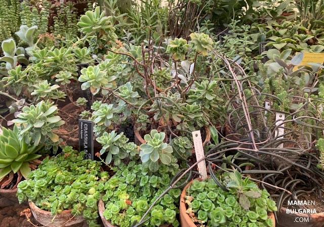 cactus y suculentas Jardín Botánico Sofía Bulgaria