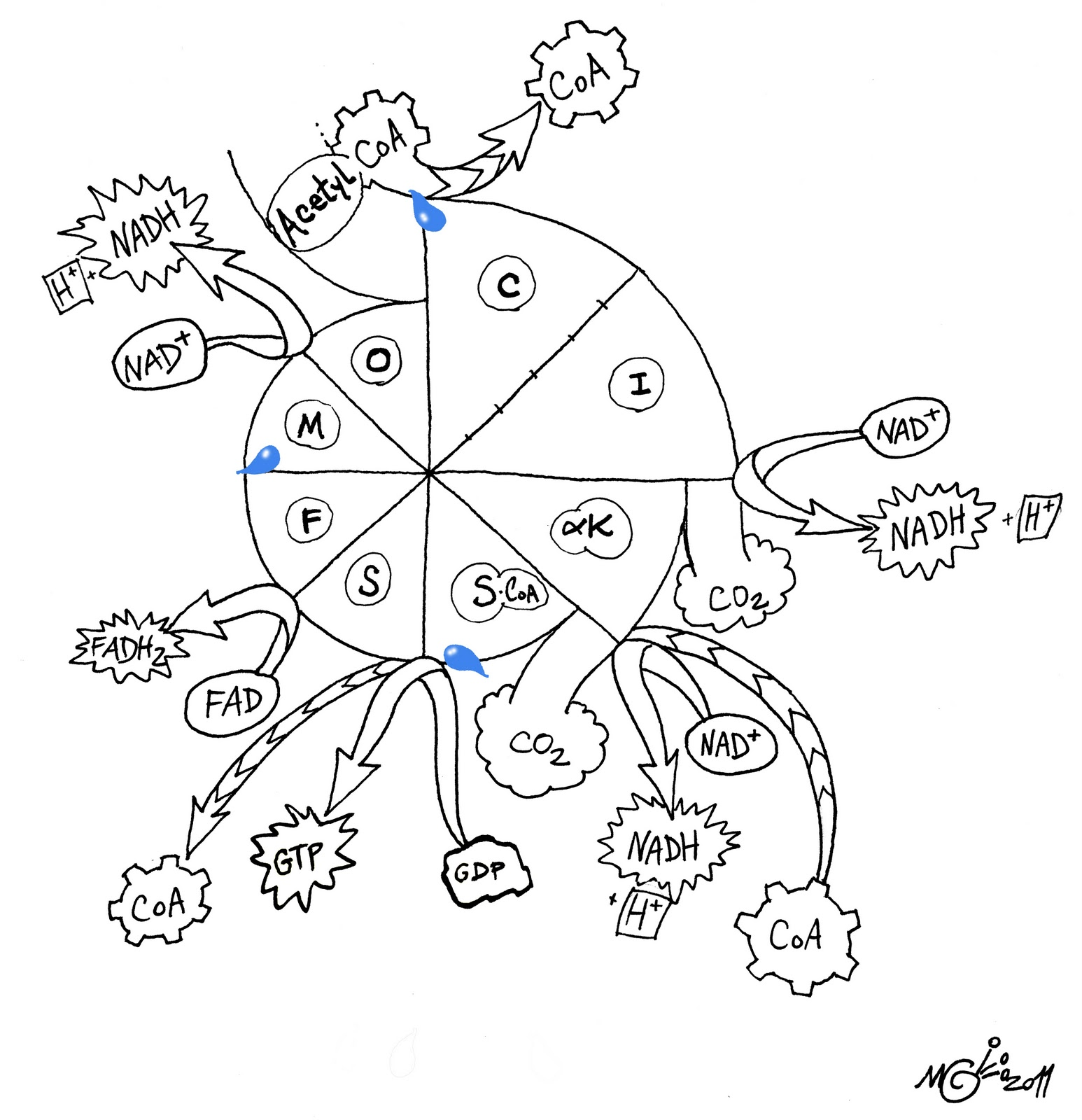Water Molecule Coloring Pages Coloring Pages
