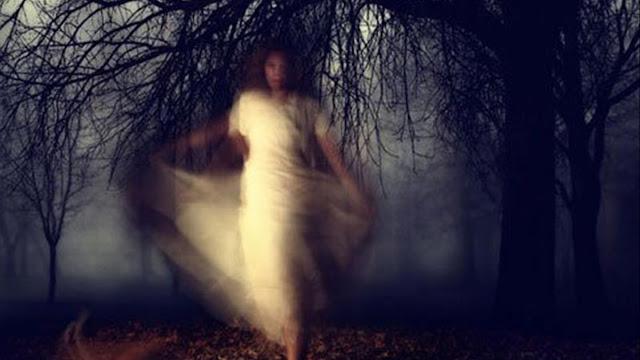 """Bí ẩn cây dâu tằm trừ tà ma, xua đuổi """"âm khí"""" trong nhà"""