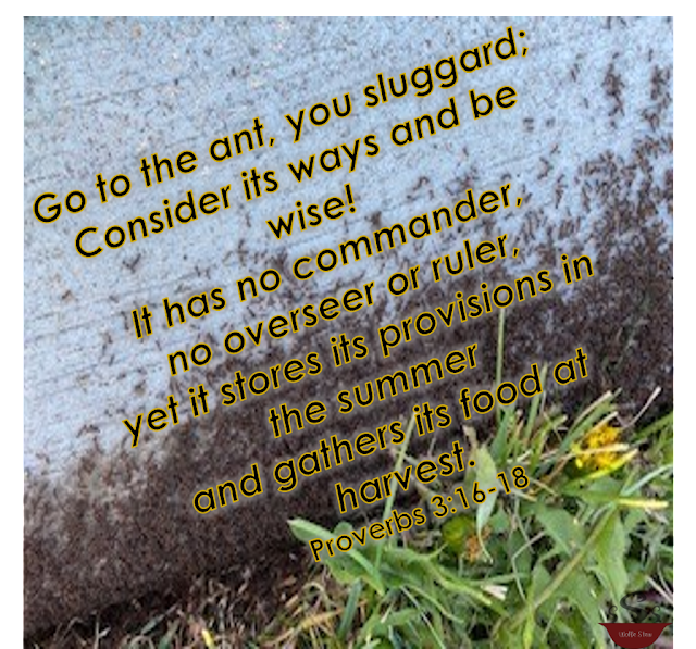 Ants in the background with the verse overlaid.