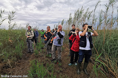 Observant les aus de Vilacoto