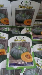 Benih Waluh/Labu THORIQ F1 Produk TRIAS AGRO SEED