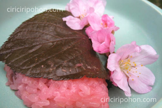 Ciri Ciri Pohon Manfaat Bunga Sakura