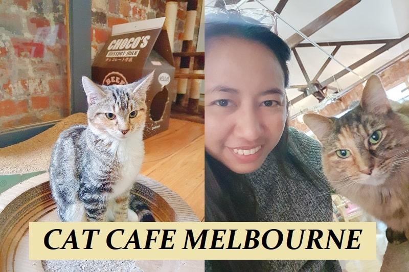 Cat Café Melbourne