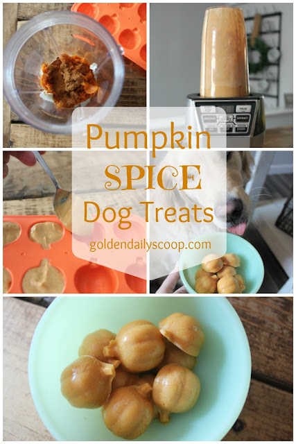 a homemade recipe for pumpkin spice dog treats
