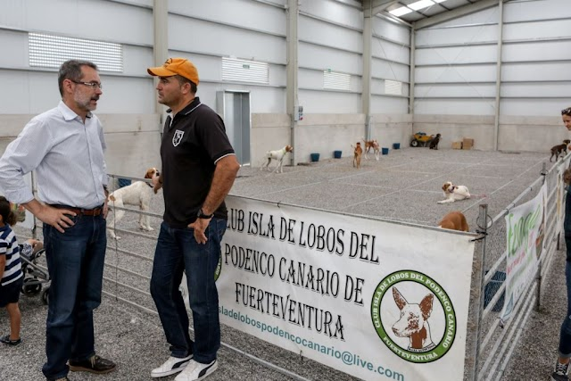 Fuerteventura.- Feaga 2019 : Una exposición muestra las características del perro de caza, de pluma y podenco canario