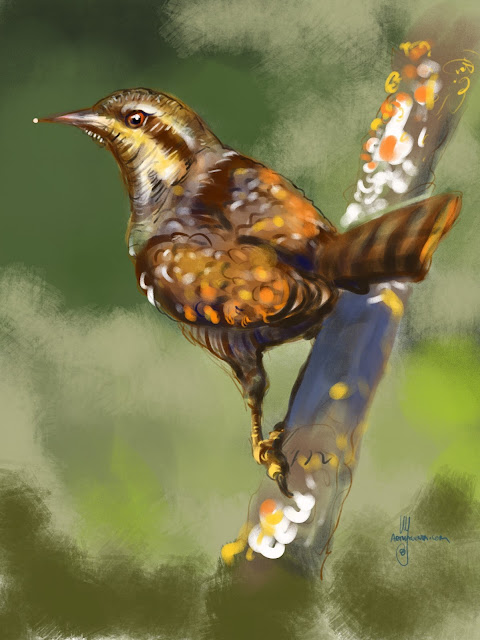 Wryneck bird painting by Artmagenta