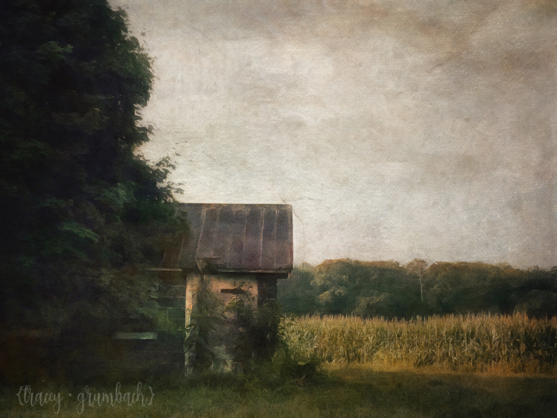 outbuilding in a field of corn