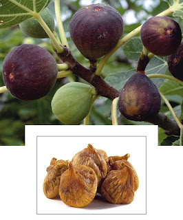 अंजीर के अनगिनत फायदे in hindi, Countless benefits of figs in hindi, Health Benefits Of Fig In Hindi, Superfood Anjeer Ke Fayde in hindi, anjeer benefits in hindi, anjeer benefits for hair in hindi, anjeer benefits for weight gain in hindi, benefits of anjeer for skin in hindi, anjeer ke barein mein in hindi, anjeer se fayde in hindi, beneficial for bones in hindi, To lose weight in hindi, beneficial for diabetics in hindi, Figs beneficial for digestion and constipation in hindi, Figs for a healthy heart in hindi, Figs are beneficial for the liver in hindi,Protects against cancer in hindi, Figs beneficial for blood pressure in hindi, Source of energy in hindi, Antioxidant properties of figs in hindi, Figs beneficial in intestinal inflammation in hindi,  Figs beneficial in asthma in hindi, Figs for sexual power in hindi, Figs to increase immunity in hindi, Figs remove wrinkles in hindi, Benefits of figs for hair in hindi, sakshambano in hindi, sakshambano website, sakshambano article in hindi, sakshambano pdf in hindi, sakshambano  jpeg, sakshambano sab in hindi, kaise sakshambano  in hindi,