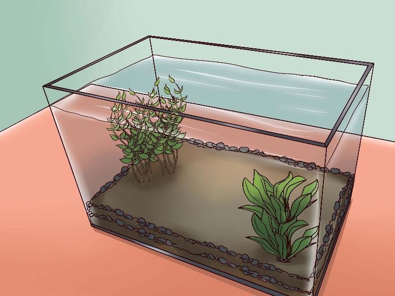 Gambar Memerikasa permukaan Air Untuk Ikan Hias Megap Megap Atau Ter-Engah Engah Di Permukaan Air