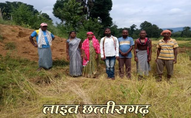 live chhattisgarh news, jangli hathi