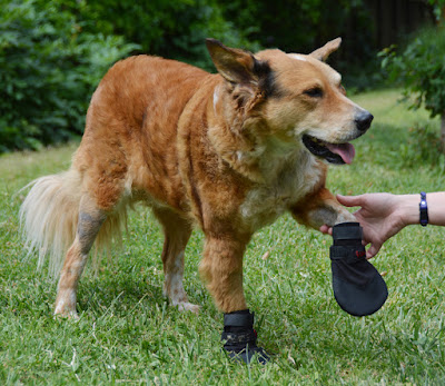 traction grip boots for senior dogs