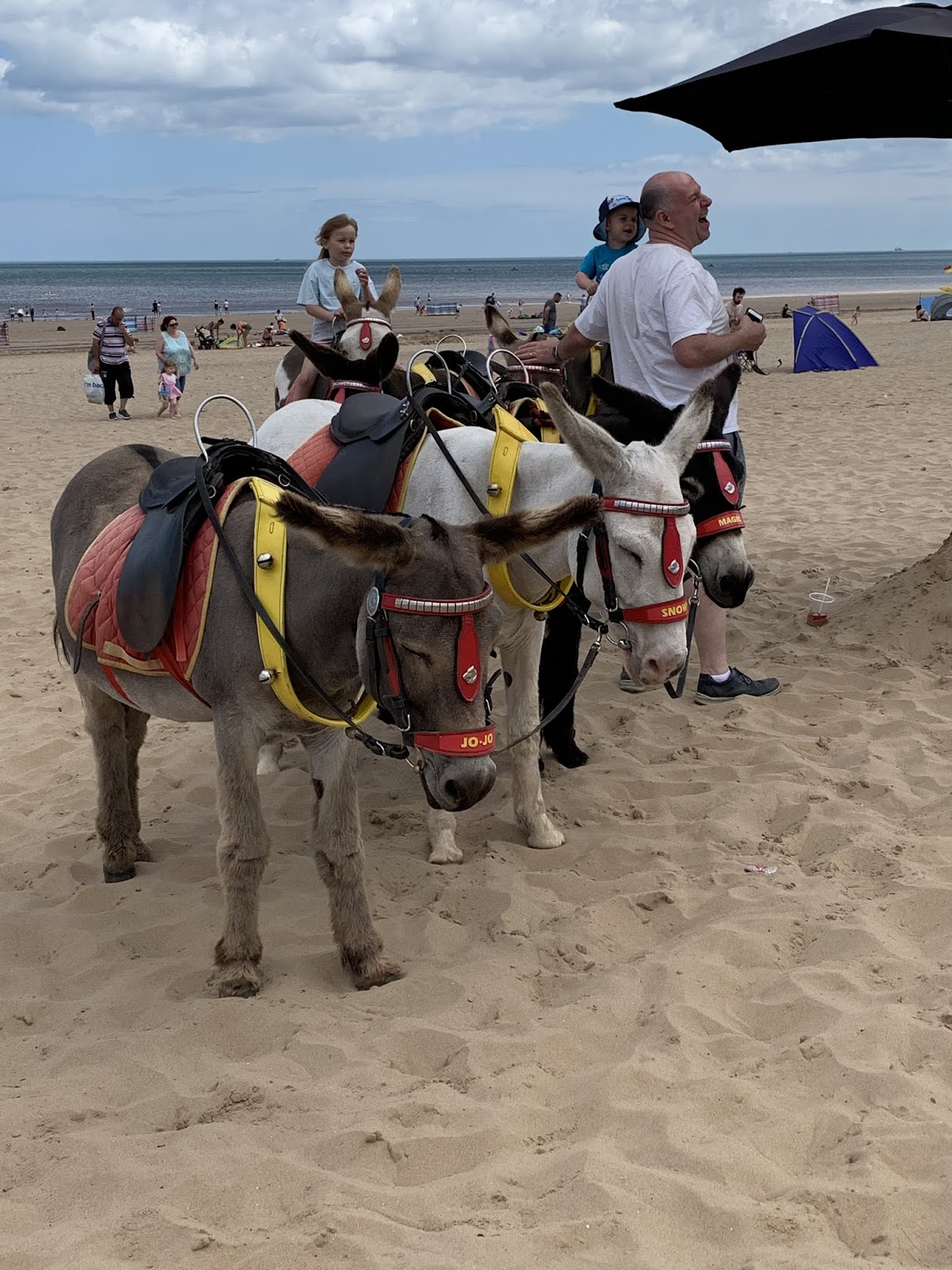 Uk-seaside-donkeys