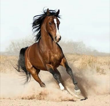 This is image of horse tell horse facts in hindi