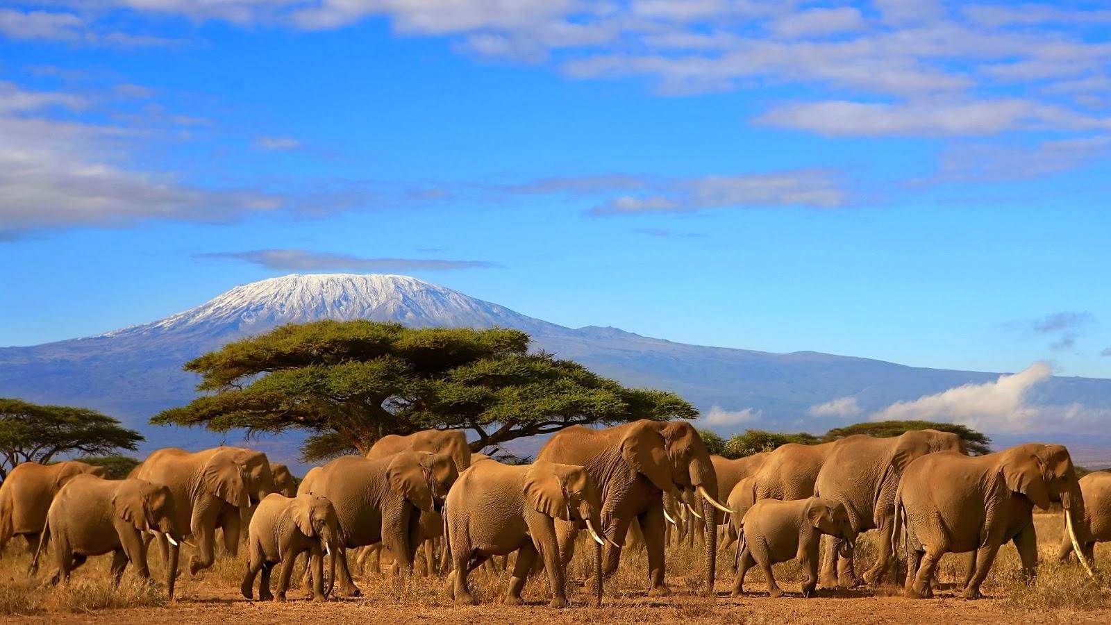 Серенгети, гора Килиманджаро, Африка