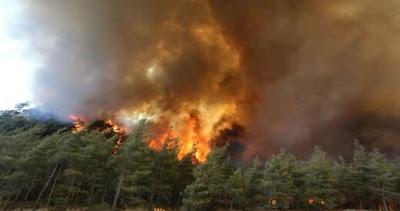 جماعة مرتبطة بحزب العمال الكردستاني تعلن مسؤوليتها عن حرائق الغابات في تركيا