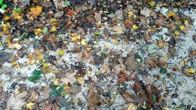 photo of leaves on the ground in autumn, slika jesenjeg lišća