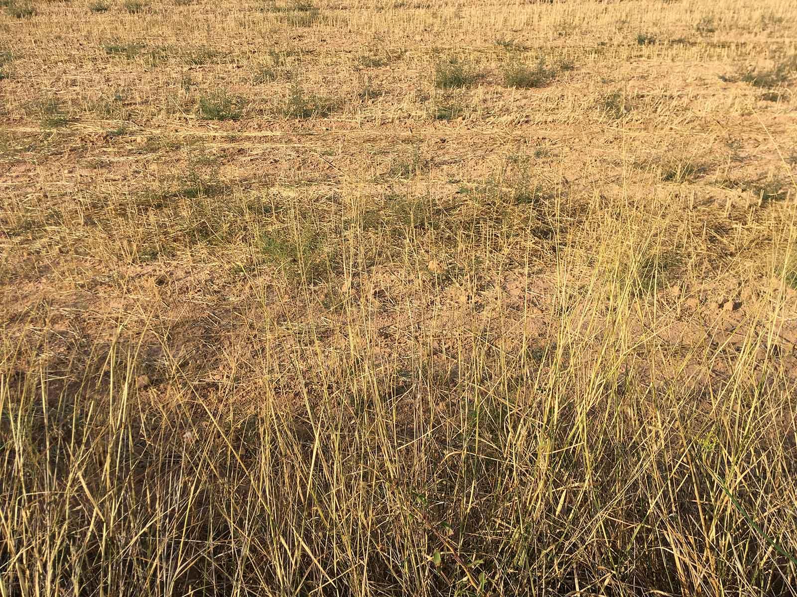 Yecla, campos yermos, julio 2017