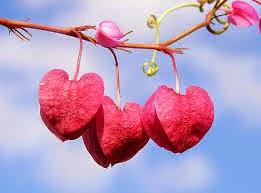 puisi_keindahan_cinta_sejati