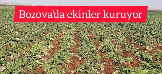 'Vicdanlarınız sızlamıyorsa tarımdan vazgeçeriz'