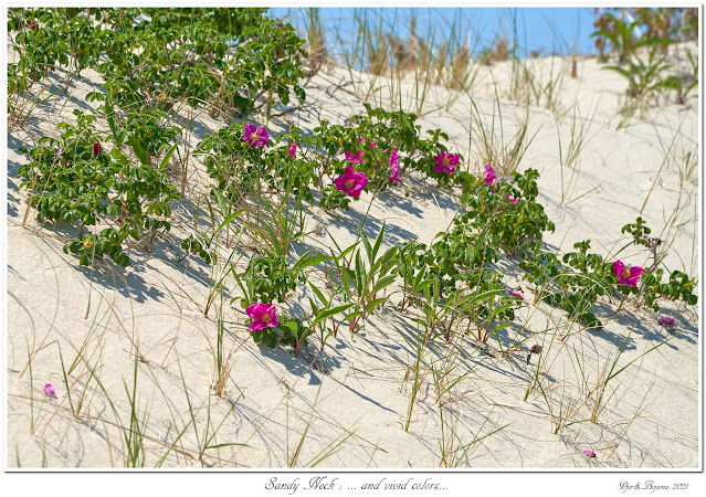 Sandy Neck: ... and vivid colors...