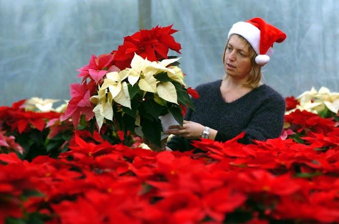 Covid: #stelleincorsia di Natale in ospedale