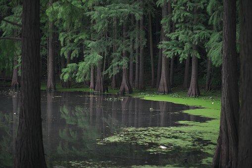 Contoh Karya Ilmiah Tentang Hutan Mangrove