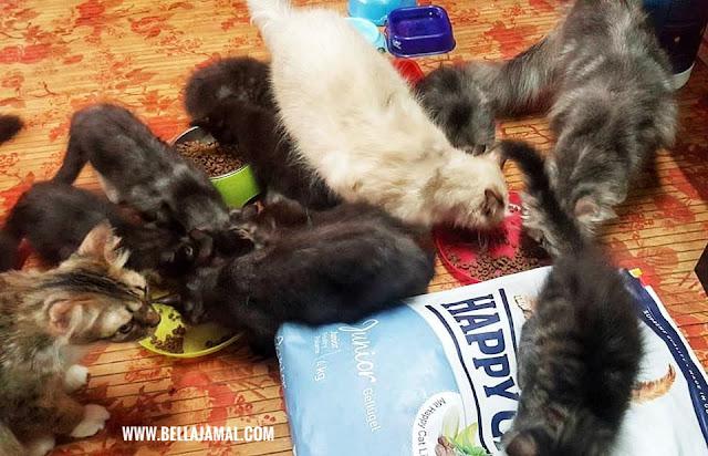 Happy Cat Junior Jenis Premium