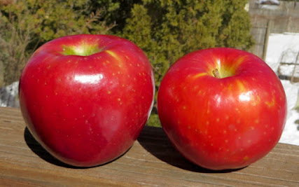 Two large red apples