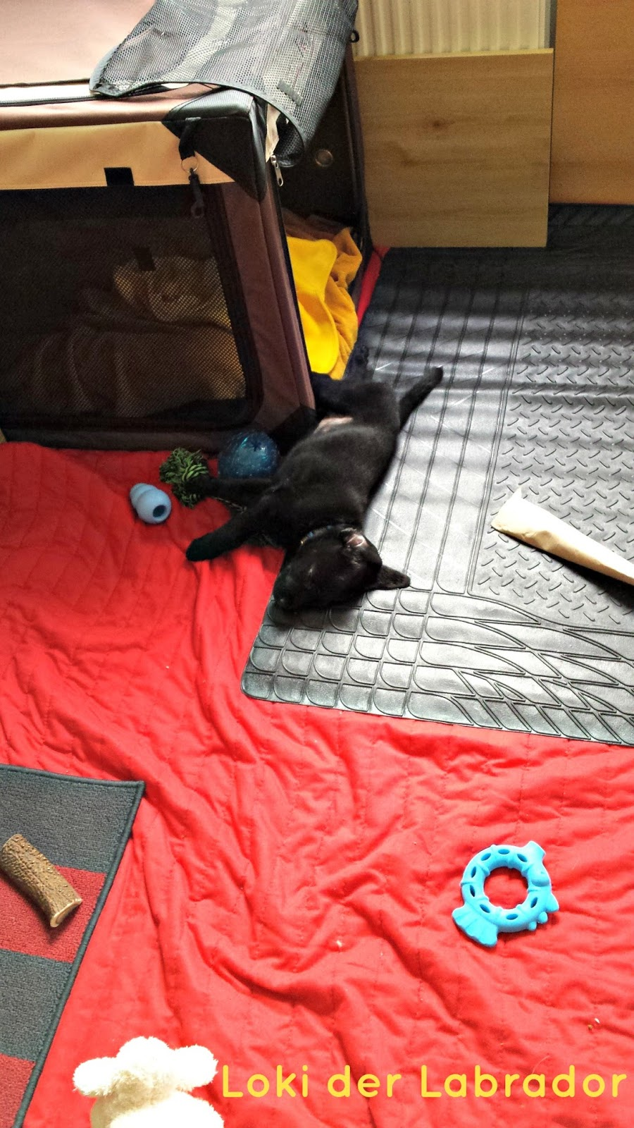 Welpe Loki in seinem Schlafbereich