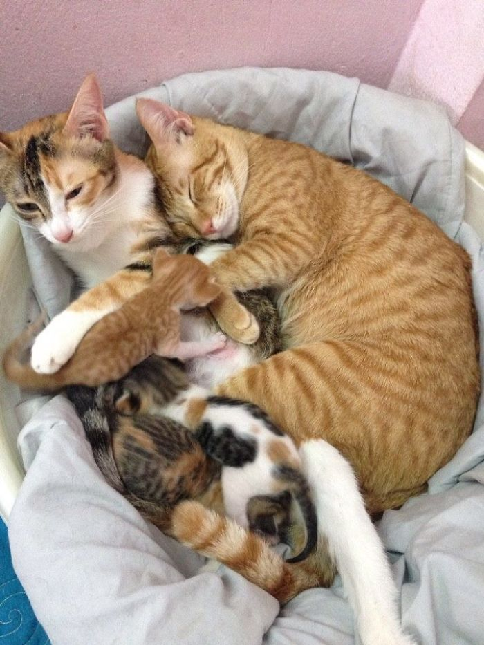 Looking Yello snuggling the kitties and cozying up his wife makes everyone jealous.