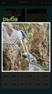 пеликан хватает рыбу у змеи в игре 667 слов 17 уровень