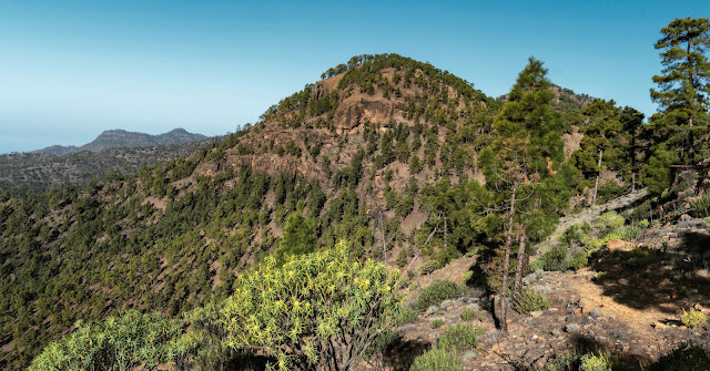 Wandern auf Gran Canaria – Von El Juncal ins Naturschutzgebiet Pajonales 13