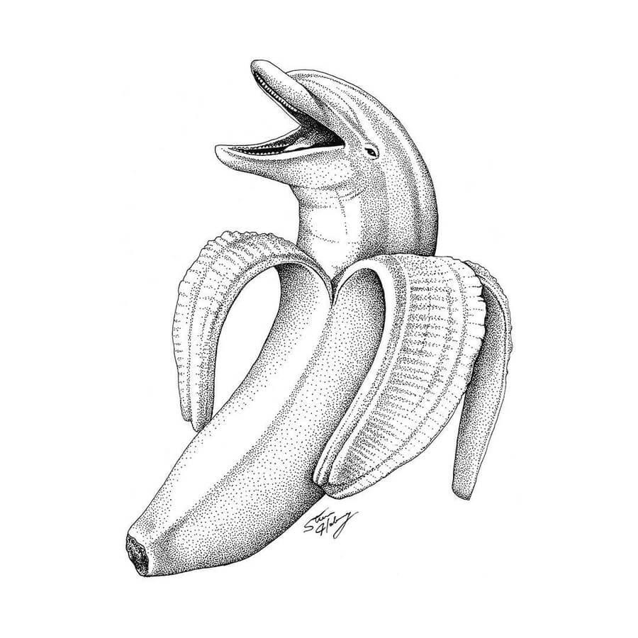 03-Dolphin-hide-and-seek-Steve-Habersang-www-designstack-co