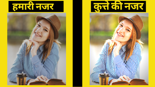 कुत्तो के बारे मे रोचक तथ्य-जो हम नहीं जानते | Fact Gyan|Dog facts in hindi,dog facts, hindi dog facts, dog facts in hindi, all types hindi facts is here, interesting fcats about dog in hindi