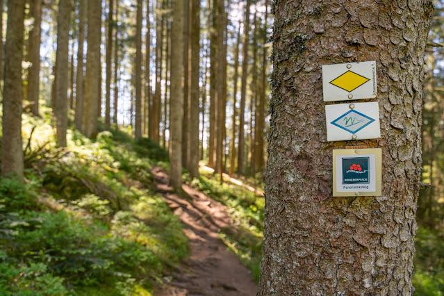 Premiumwanderweg Murgleiter | Etappe 4 von Schönmünzach nach Baiersbronn | Wandern nördlicher Schwarzwald 05