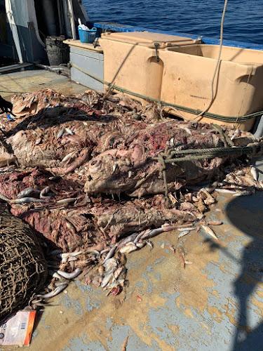 IMG 20200904 WA0000 - Como todos los años los arrastreros de Santa Pola cogiendo atunes en descomposición