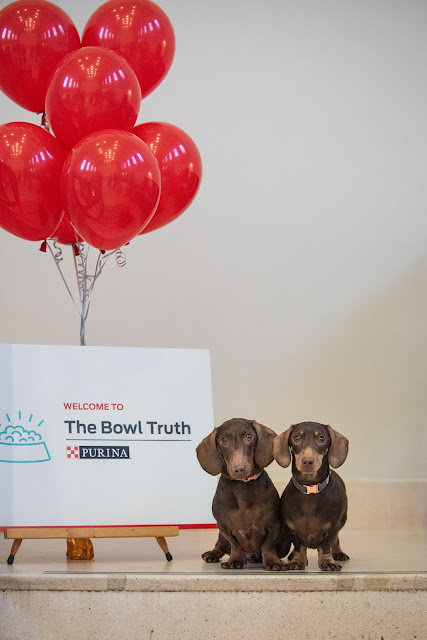 The Bowl Truth - Purina