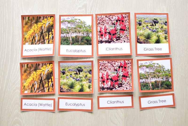 Oceania CONTINENT Study: PLANTS OF OCEANIA 3 PART CARDS